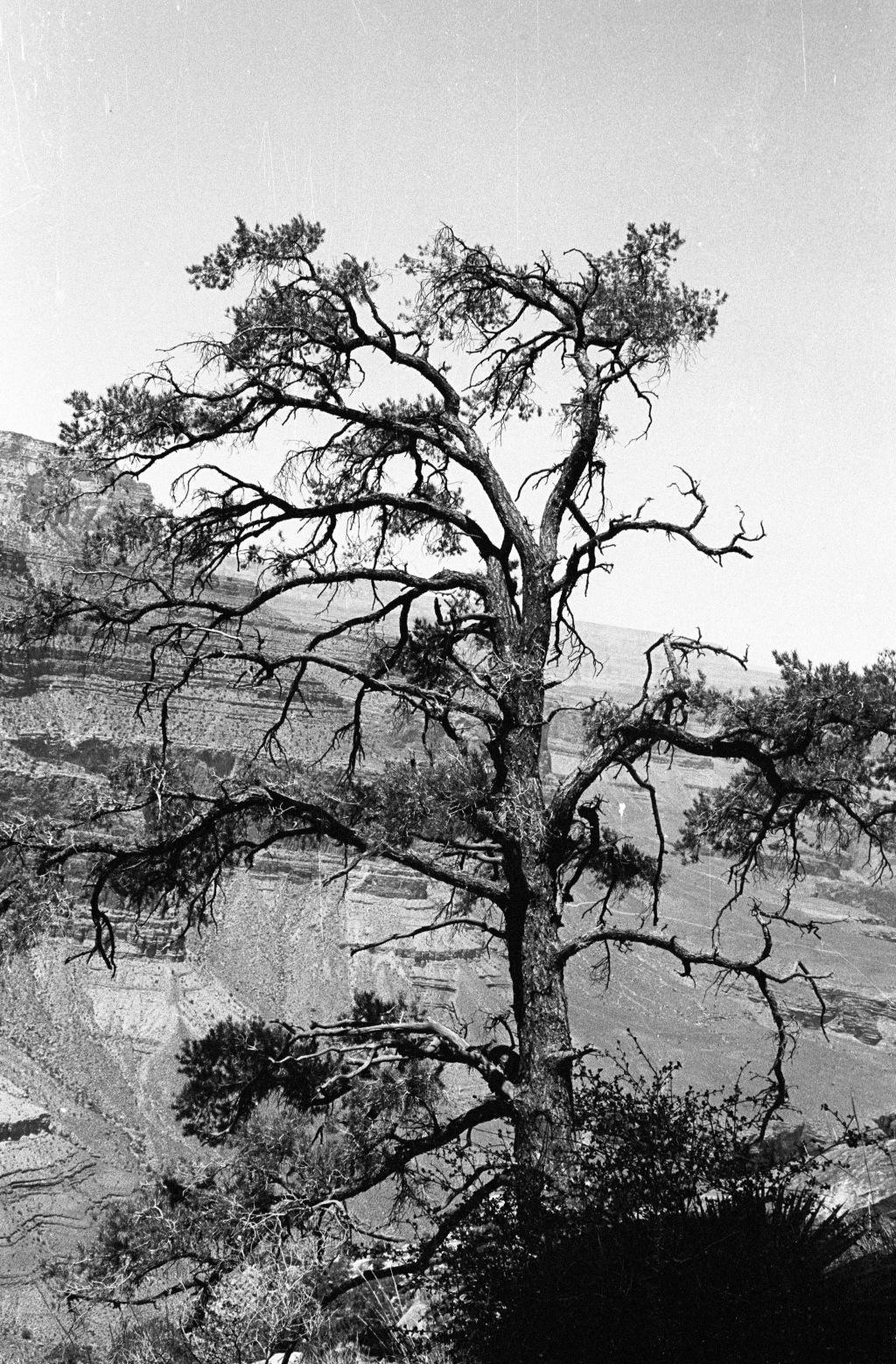 GC-Tree